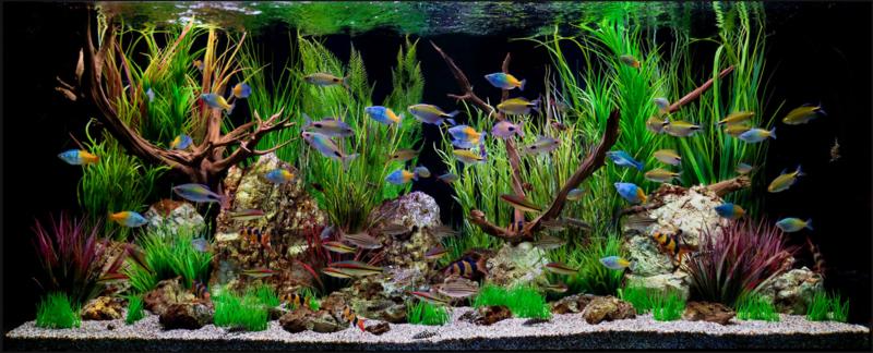 Beratung - Aquarium dekorieren ideen ...